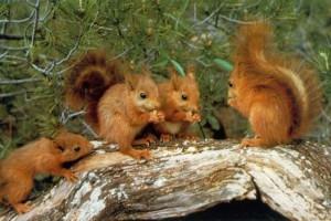 foto scoiattoli
